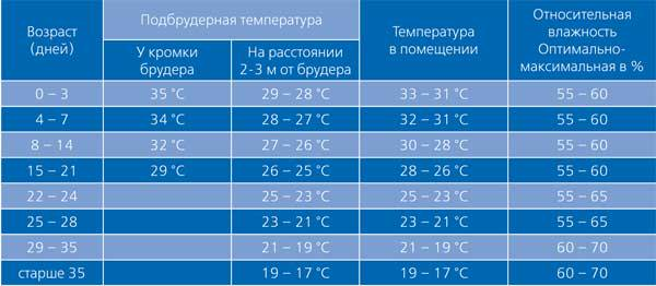 температурный режим для цыплят
